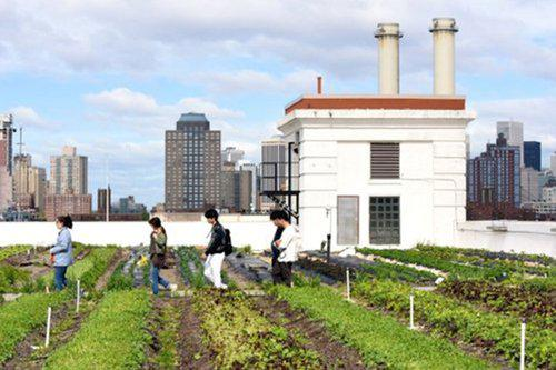 Allergic to Salad (at Brooklyn Grange)